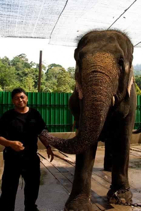Razali - The Elephant Man & Lokimala