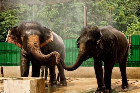 gajah+elephant
