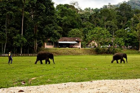 baby elephants crossing the soccer field