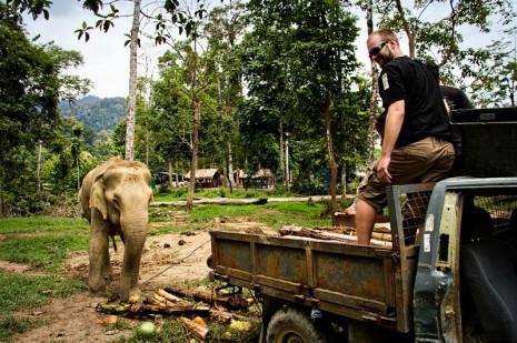 Mike feeding Mek Bunga at the Kuala Gandah Elephant Sanctuary