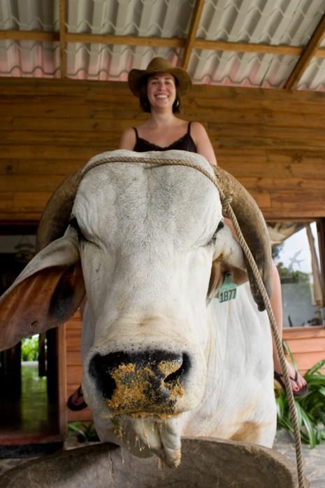 Lauren on a bull