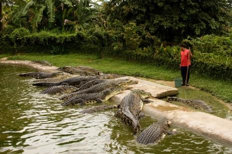 Crocodile Adventure Land -  Langkawi, Malaysia