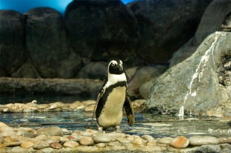 Penguin - Underwater World, Pantai Cenang, Langkawi, Malaysia