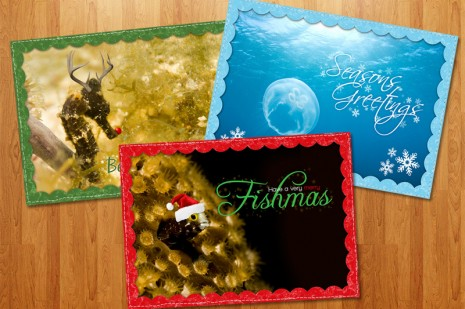 Scuba Themed Chritmas Cards
